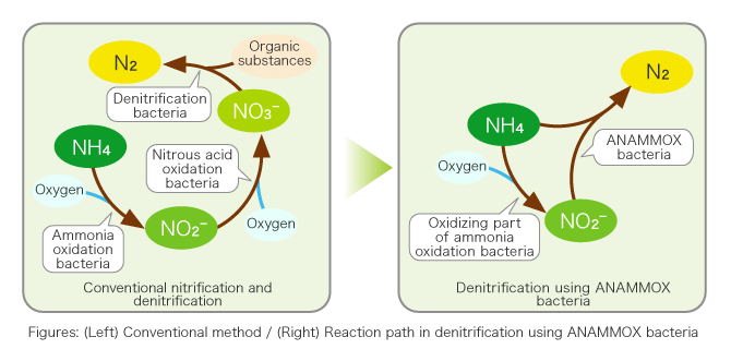 Figures: (Left) Conventional method / (Right) Reaction path in denitrification using ANAMMOX bacteria)